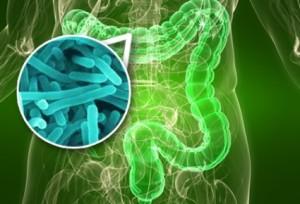 probioticos 2