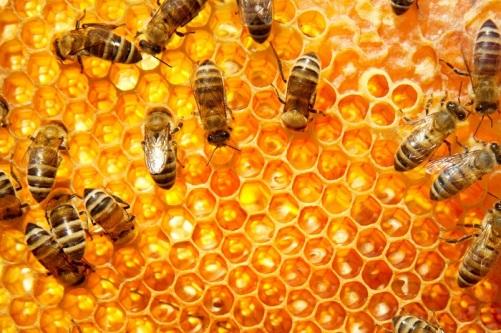 abejas.jpg